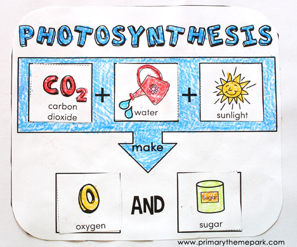 Photosynthesis for Kids Primary Theme Park – Photosynthesis Worksheets Kids