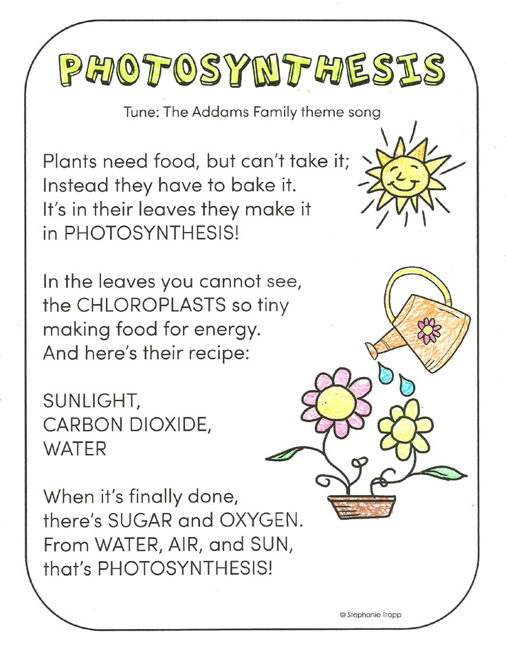Photosynthesis For Kids Worksheets Photosynthesis For Kids