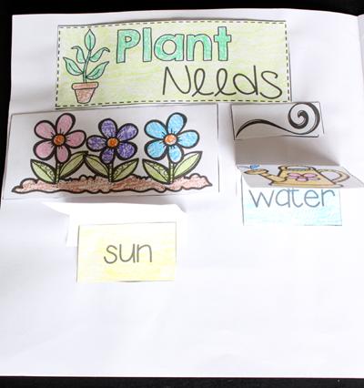 Plant Printables for a Plant Unit
