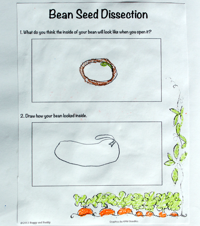 Plant Printables for a Plant Unit