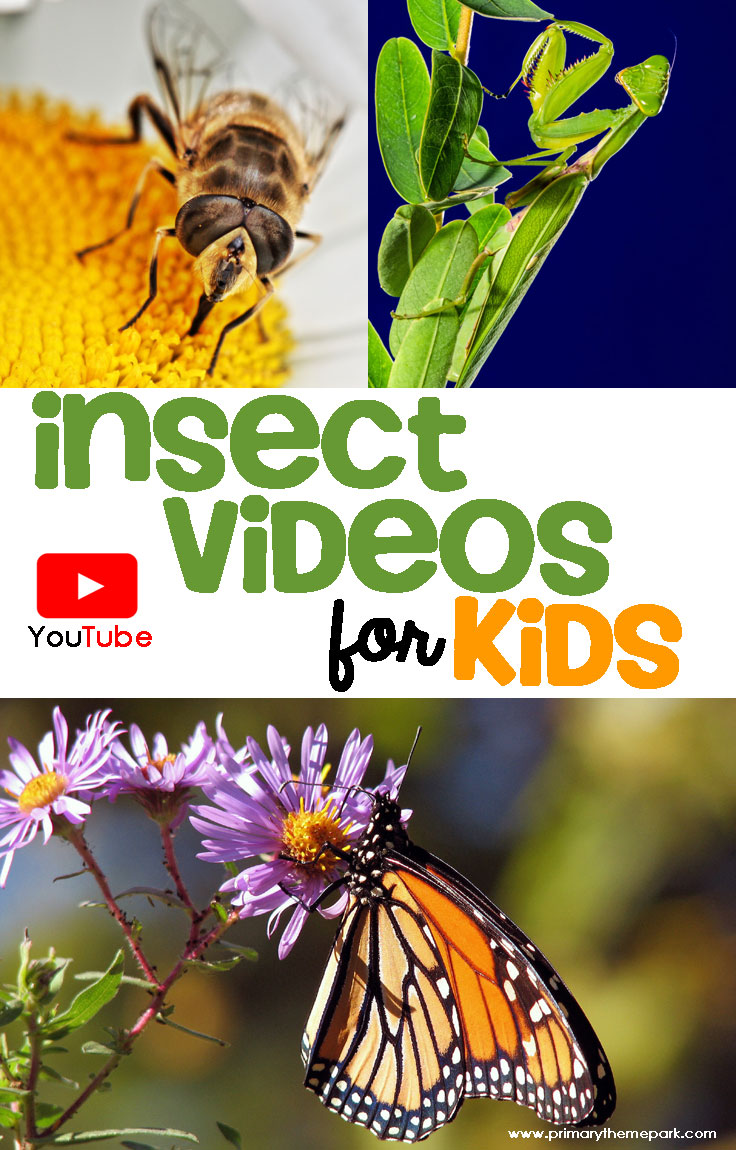 A collection of insect videos for kids that are perfect for your bug unit!