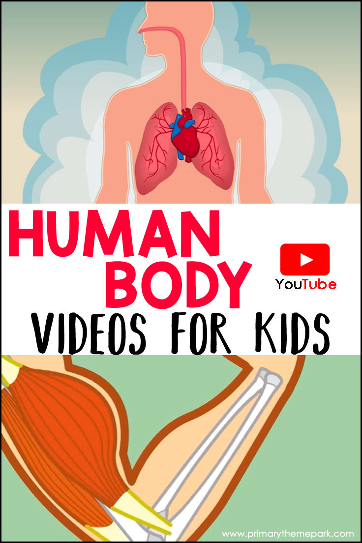 Human Body Videos For Kids Primary Theme Park