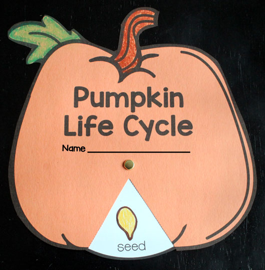 Pumpkin Life Cycle Wheel :: Pumpkin Unit for Kindergarten and First Grade