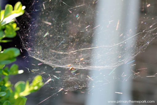 Spider Web Scavenger Hunt | Types of Spider Webs | Spider Web Activities for Kids