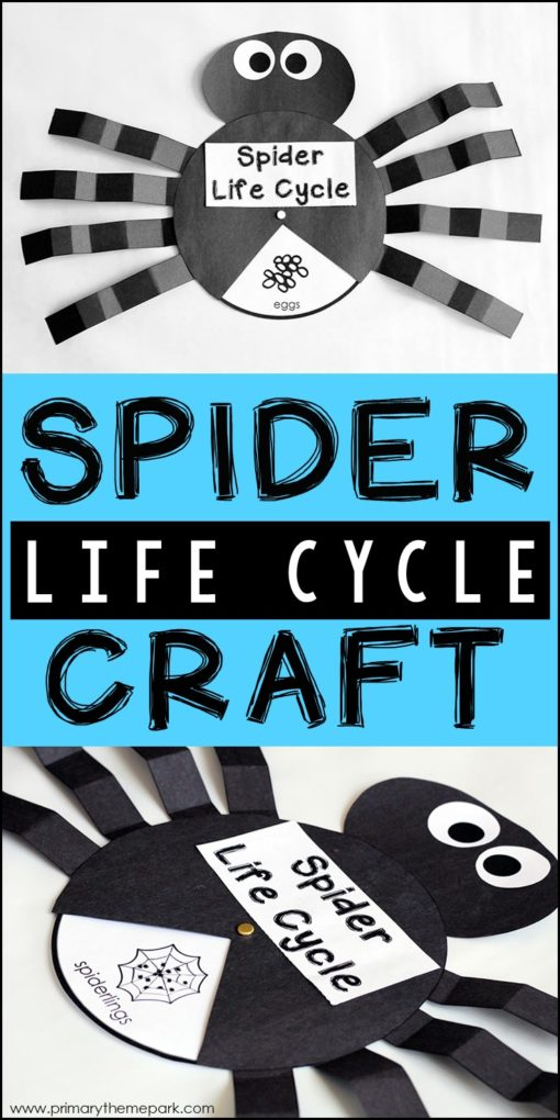 Spider Life Cycle Craft | Spider Life Cycle Activities | Spider Life Cycle Printable