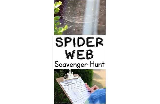 Spider Web Scavenger Hunt | Spider Activities for Kids | Types of Spider Webs
