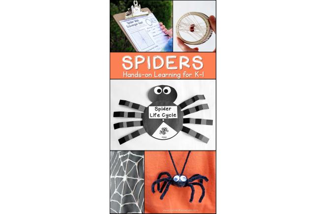 Spider Unit for Kindergarten and First Grade | Spider Unit 1st Grade | Spider Activities for Kids