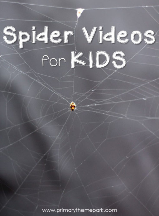 Spider Videos for Kids | Spider Activities | Spider Unit