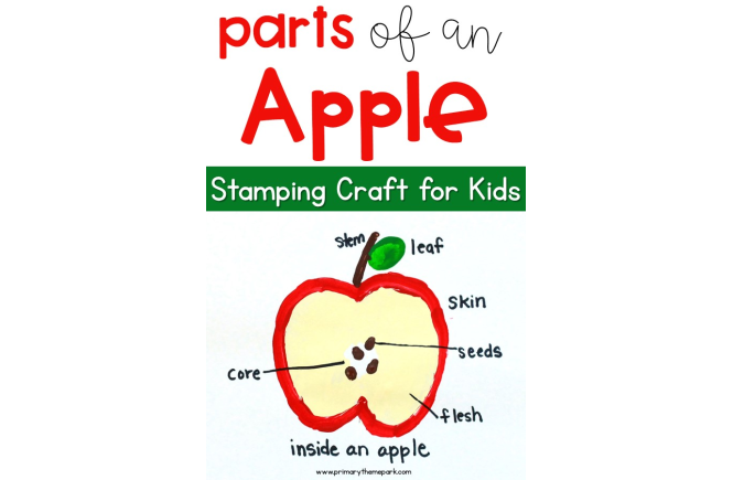 Parts of an Apple Craft for Kids
