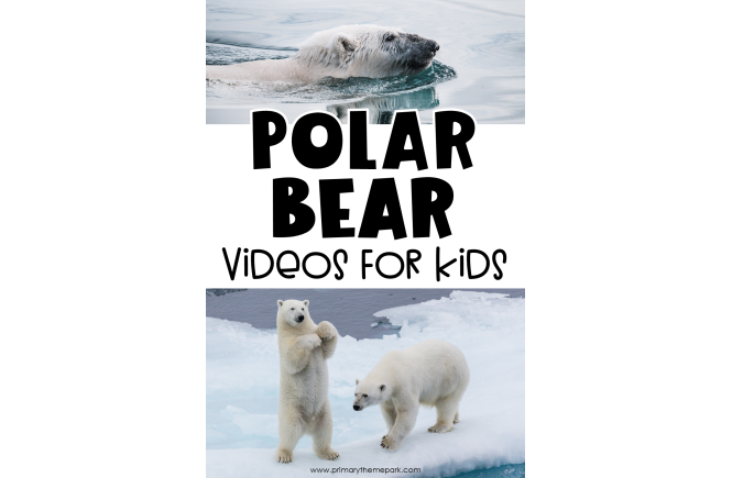 Polar Bear Videos for Kids