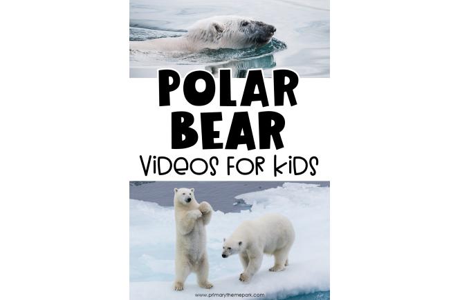 Polar Bear Videos for Kids