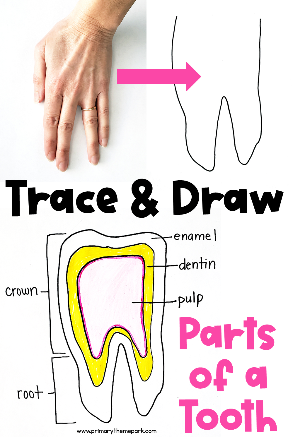 How to Draw a Parts of a Tooth Diagram for Kids. It's as easy as tracing your hand!