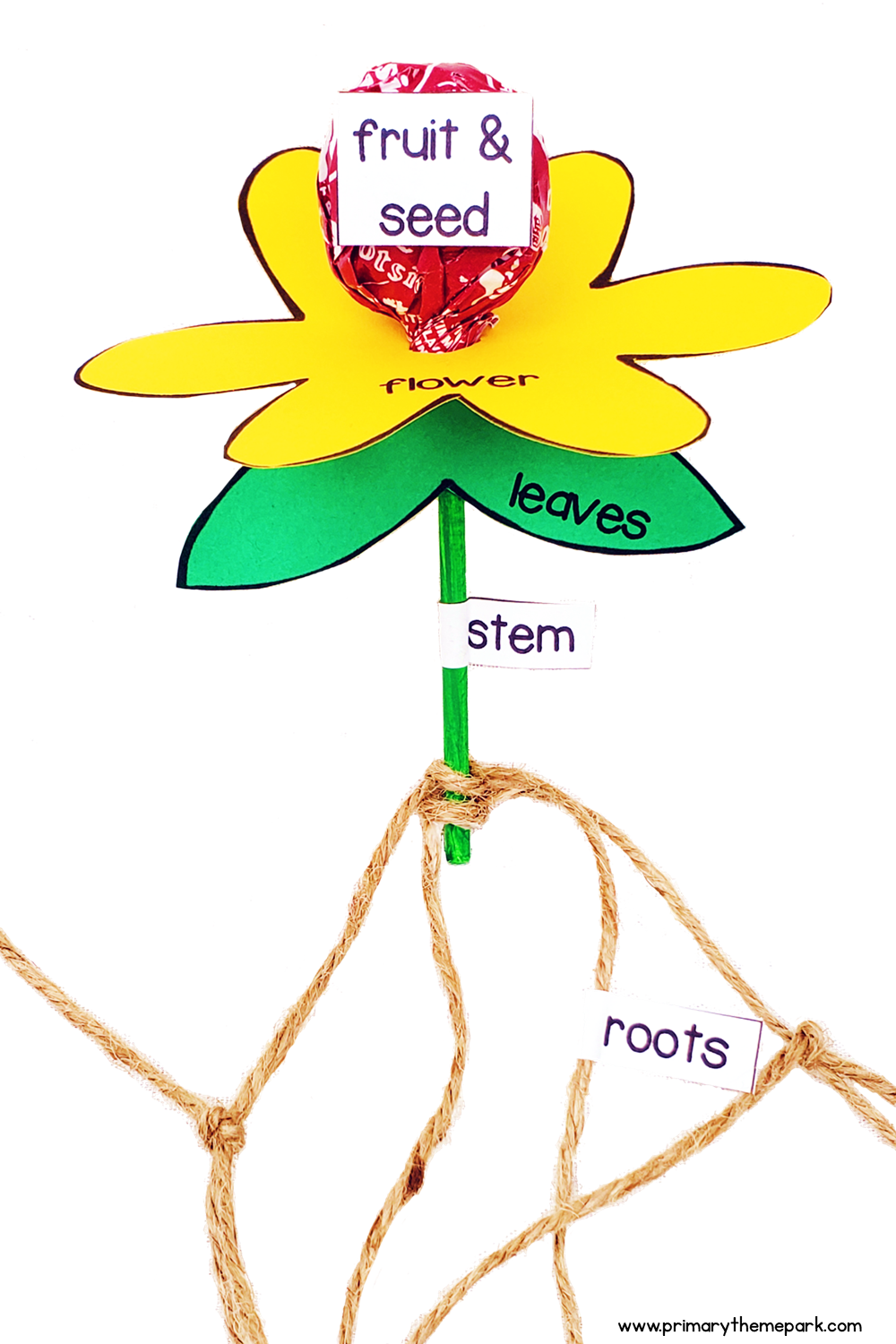 parts of a plant activity made with a Tootsie Roll pop