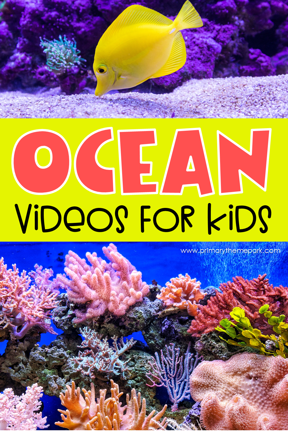 Kids love learning about the ocean and are often full of questions about it.  These ocean videos for kids are a great place to find the answers!