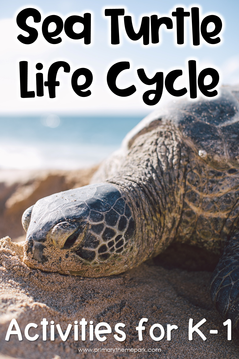 Fun, interactive sea turtle life cycle activities for kindergarten and first grade.  After student read about and watch the life cycle, they act it out and make a sea turtle life cycle craft.