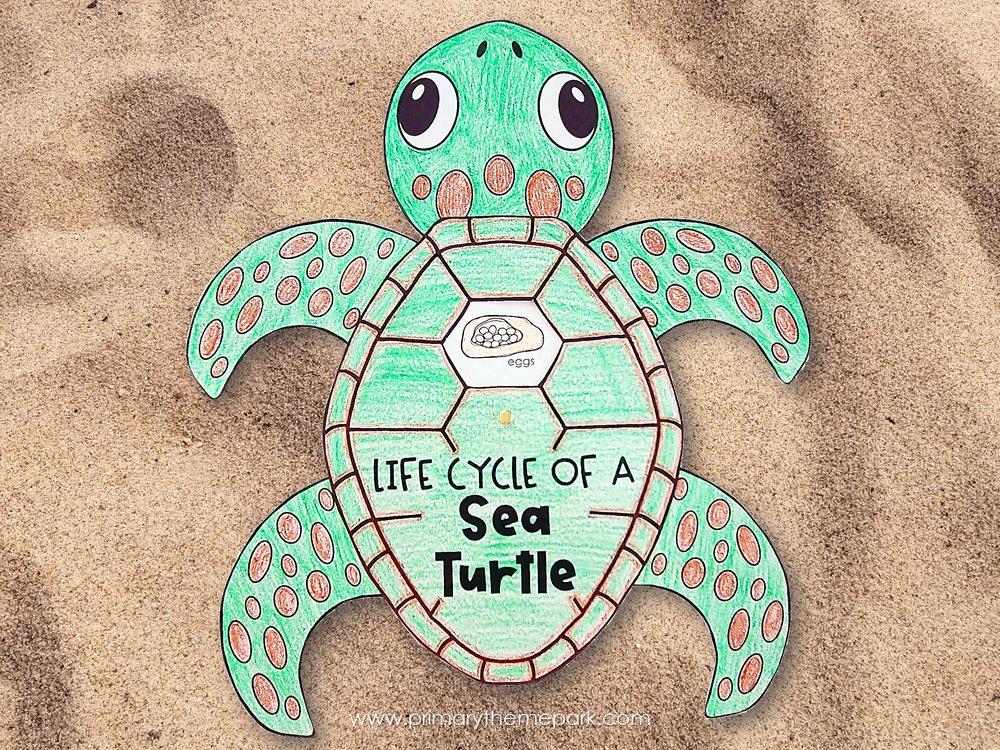 Sea turtle life cycle craft for kindergarten and first grade